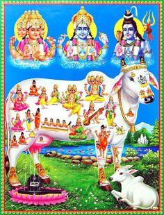 india-nepal-viaggi-cosmic-cow.jpg