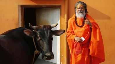 monaco e mucca