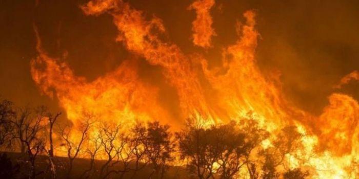 incendi amazzonia.jpg